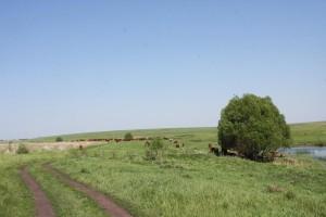 поле и дарога